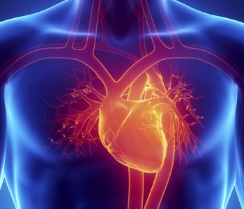Tavr For Aortic Stenosis Saint Francis Healthcare System